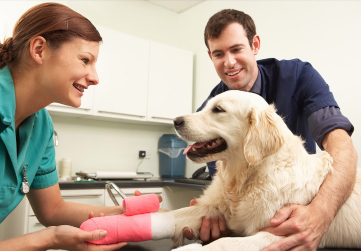 Rundum Schutz für dein Haustier - Vorstellung von AGILA Versicherung