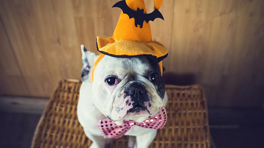 pronti-ad-un-halloween-ricco-di-offerte-da-paura-it