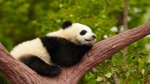 la-siesta-beneficia-nuestra-salud