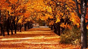 autumncom