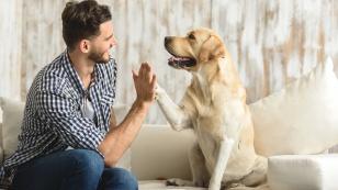 kochamy-zwierzaki