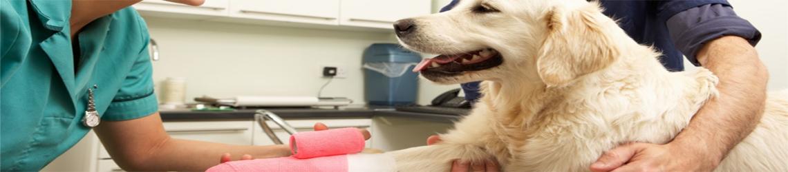 Assurances vétérinaire