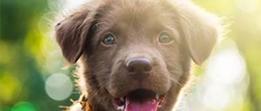 PDSA Pet Insurance