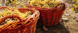 Italiaanse Wijnen Online