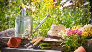 summer-planting