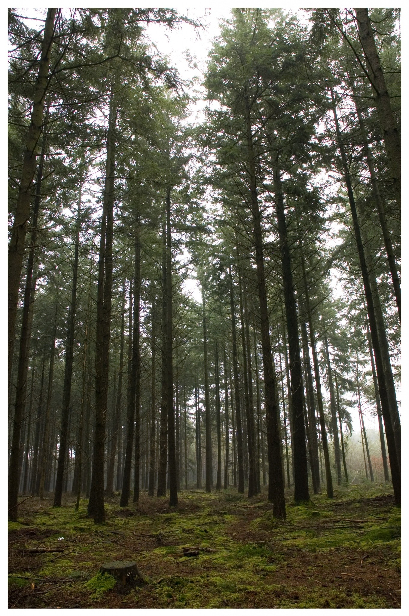 maak-spreekwoord-af-hoge-bomen