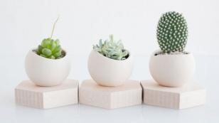 woontrend-cactussen