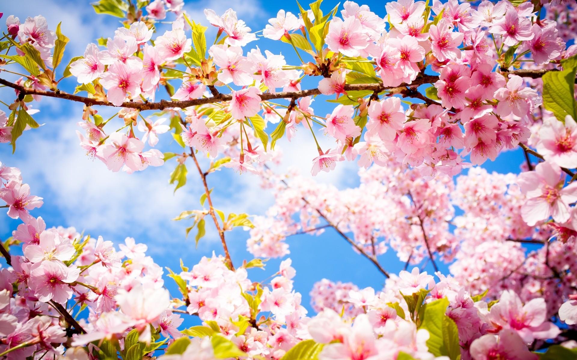 le-printemps-arrive-fr