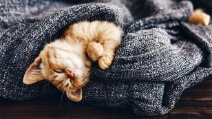 las-mascotas-nuestros-mejores-amigos-cuida-de-ellos
